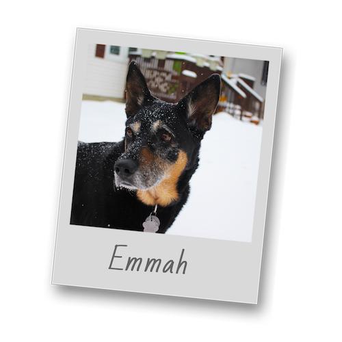 Emmah   polaroid pets