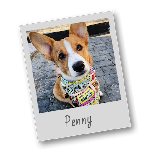 Penny   template   polaroid pets