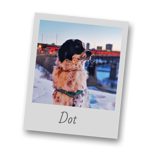 Dot   polaroid pets   resize to 500x500