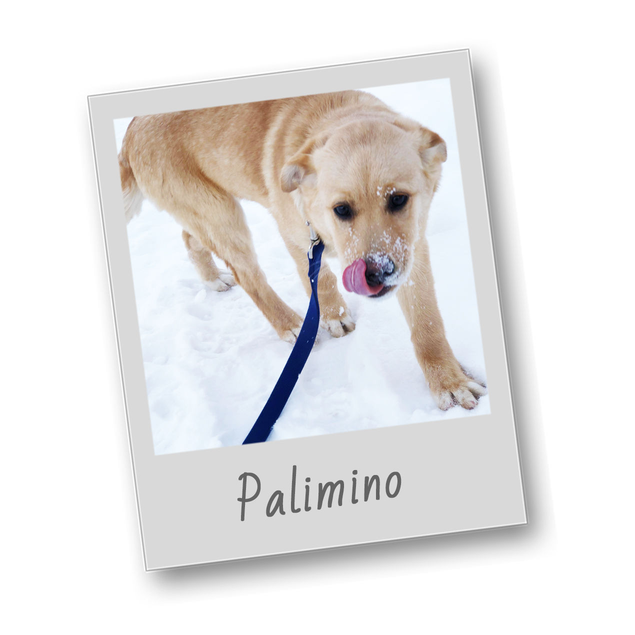 Palimino template   polaroid pets   resize to 500x500