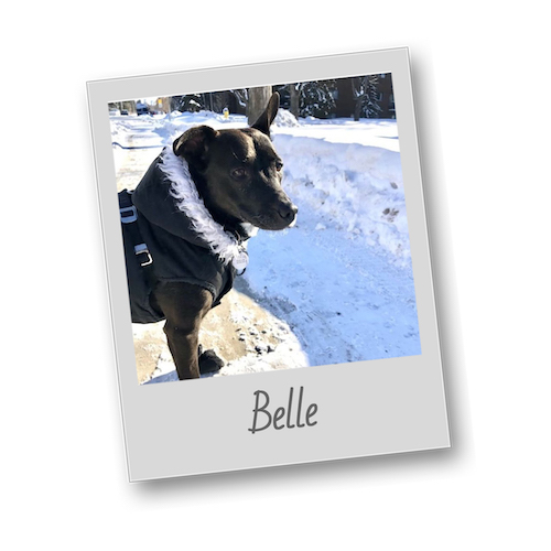 Belle with name   polaroid pets   500x500