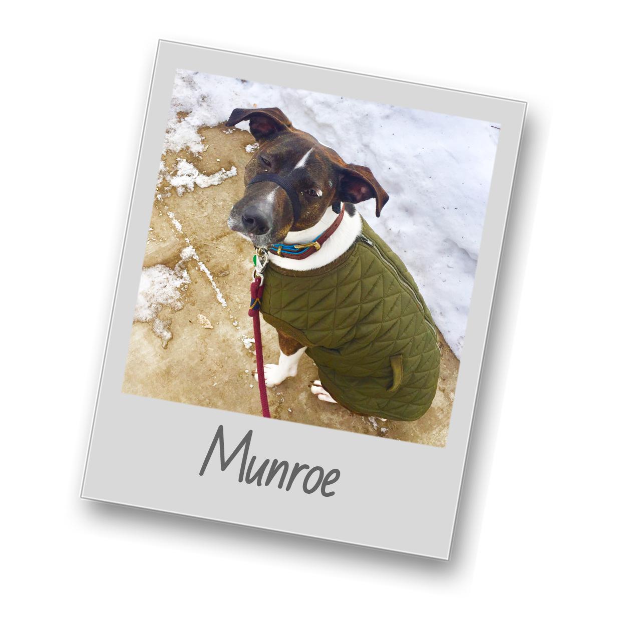 Munroe template   polaroid pets