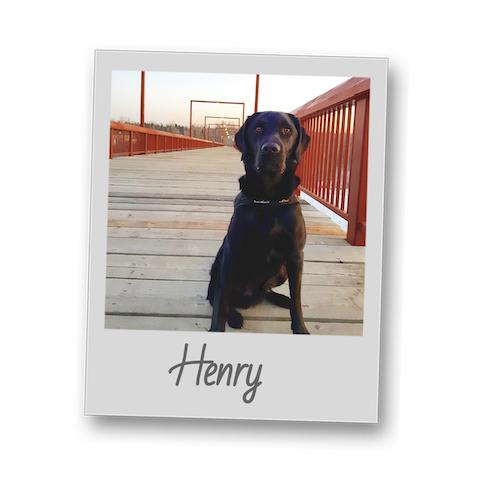 Henry   polaroid pets   500x500