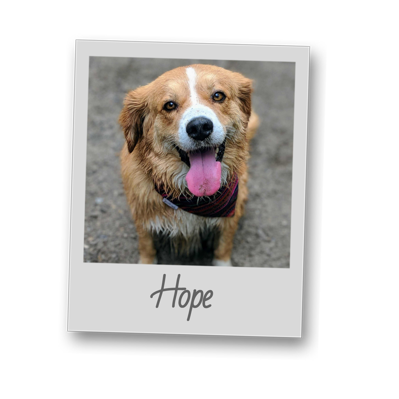 Hope   template   polaroid pets   resize to 500x500