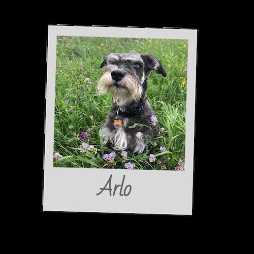 Arlo   template   polaroid pets   500x500