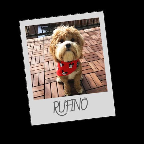 Rufino   polaroid pets   resize to 500x500